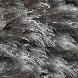 feather-texture (30)