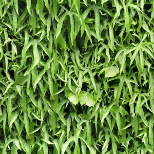 foliage-texture (1)