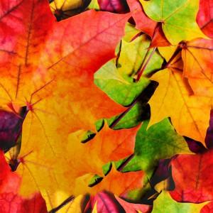 foliage-texture (100)