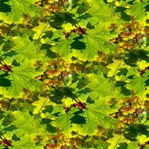 foliage-texture (101)