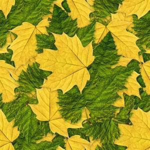 foliage-texture (102)