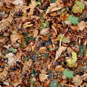 foliage-texture (103)