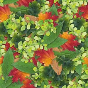 foliage-texture (104)