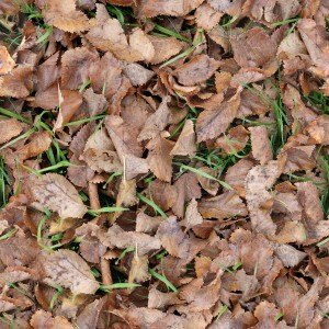foliage-texture (105)