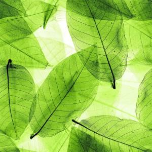 foliage-texture (106)