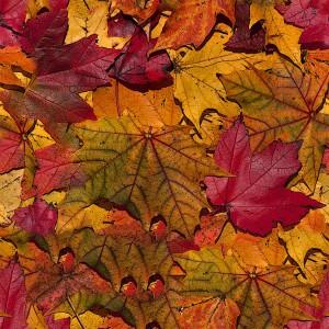 foliage-texture (107)
