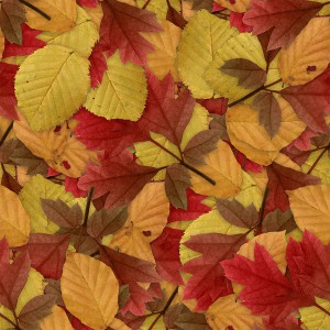 foliage-texture (108)