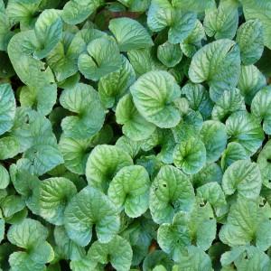 foliage-texture (109)
