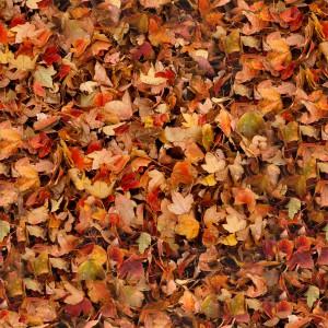 foliage-texture (114)