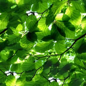 foliage-texture (115)