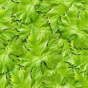 foliage-texture (117)