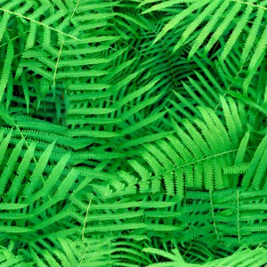 foliage-texture (118)
