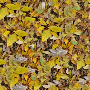 foliage-texture (119)