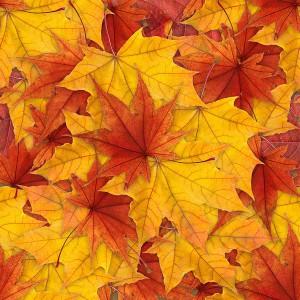 foliage-texture (13)