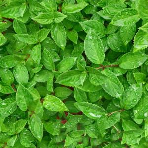 foliage-texture (14)