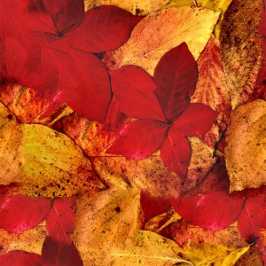 foliage-texture (15)