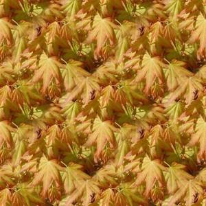 foliage-texture (18)