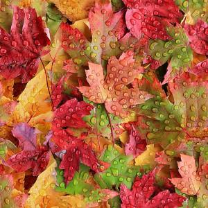 foliage-texture (22)