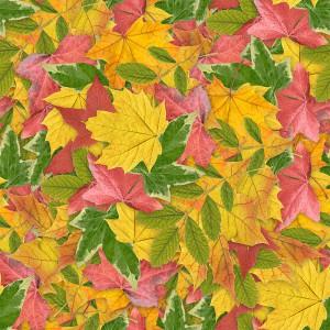 foliage-texture (24)