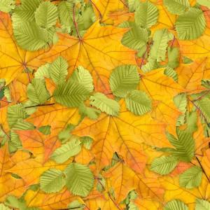 foliage-texture (33)