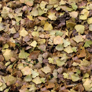 foliage-texture (39)
