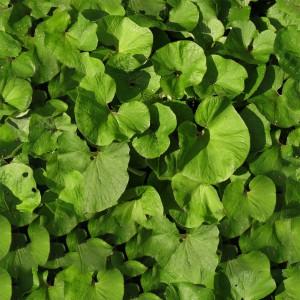 foliage-texture (42)