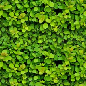 foliage-texture (50)