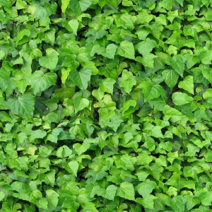 foliage-texture (53)