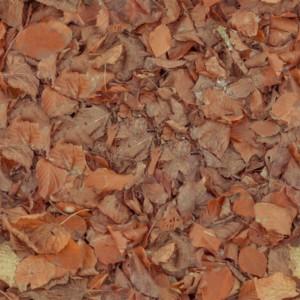 foliage-texture (56)