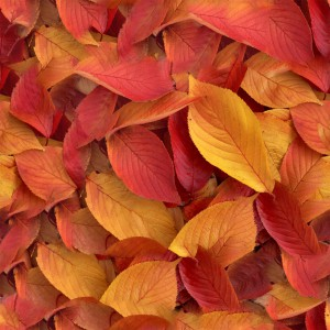 foliage-texture (58)