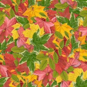 foliage-texture (66)