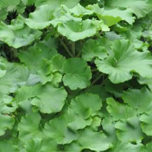 foliage-texture (67)