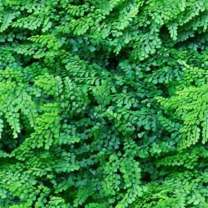 foliage-texture (68)