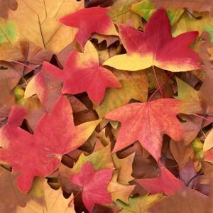 foliage-texture (70)