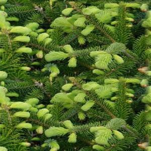 foliage-texture (71)