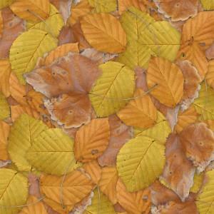 foliage-texture (77)