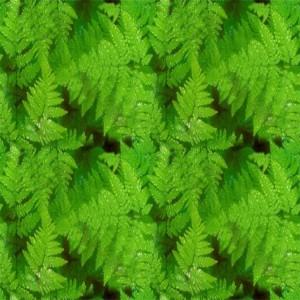 foliage-texture (78)