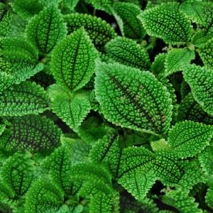 foliage-texture (8)