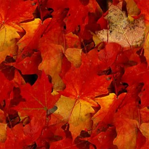 foliage-texture (82)