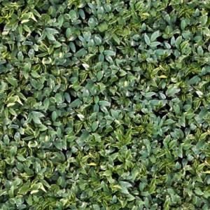 foliage-texture (94)