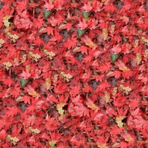 foliage-texture (96)