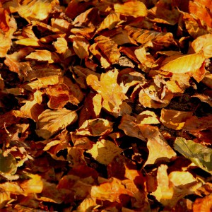 foliage-texture (98)