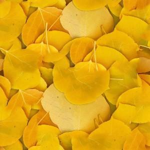 foliage-texture (99)