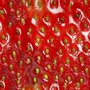 fruitpeel-texture (42)