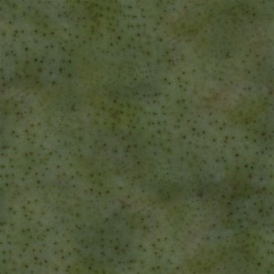 fruitpeel-texture (79)