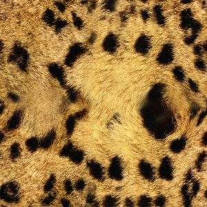 fur-texture (33)