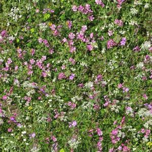 grass-texture (10)