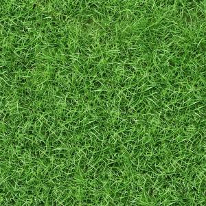 grass-texture (100)