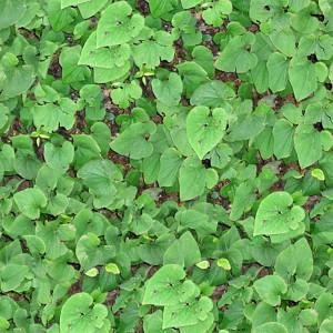 grass-texture (14)
