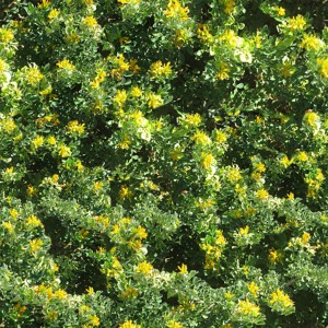 grass-texture (16)